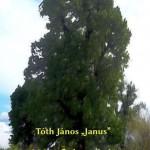 """Tóth János """"Janus"""": Hársfalevelek"""